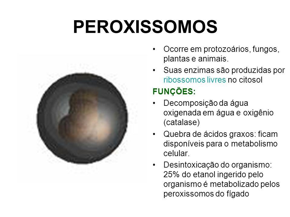 PEROXISSOMOS Ocorre em protozoários, fungos, plantas e animais.