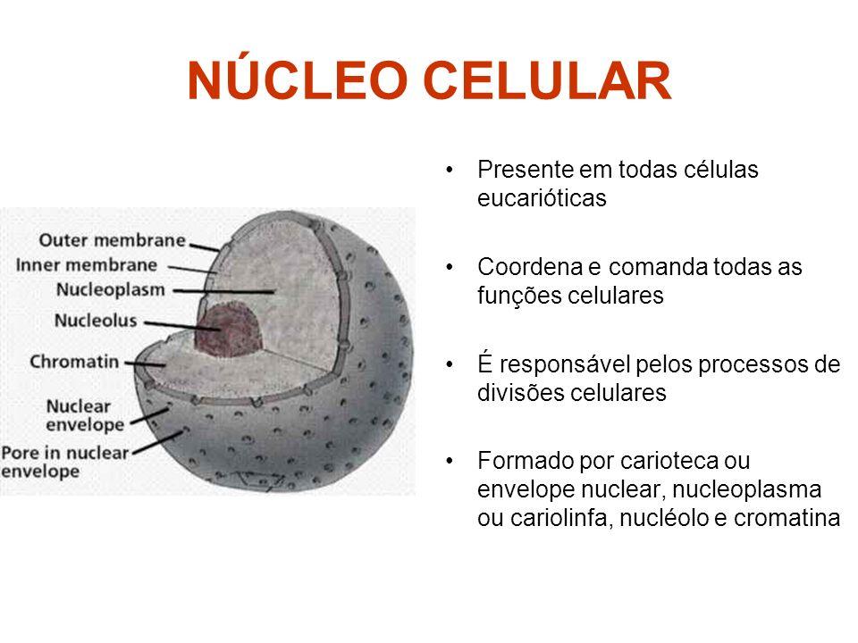 NÚCLEO CELULAR Presente em todas células eucarióticas