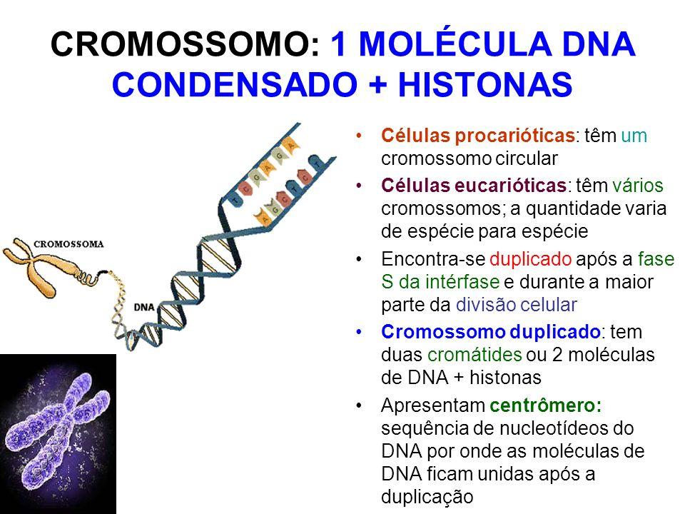 CROMOSSOMO: 1 MOLÉCULA DNA CONDENSADO + HISTONAS