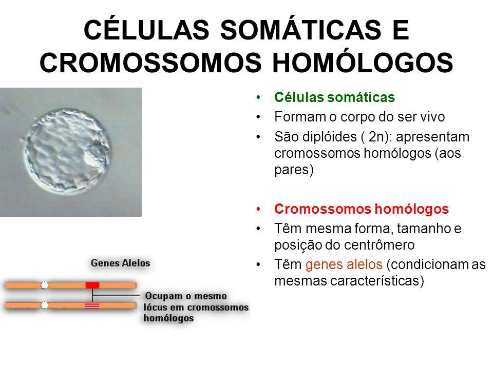 CÉLULAS SOMÁTICAS E CROMOSSOMOS HOMÓLOGOS