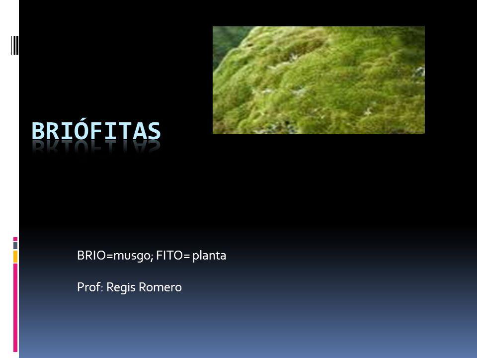 BRIO=musgo; FITO= planta Prof: Regis Romero
