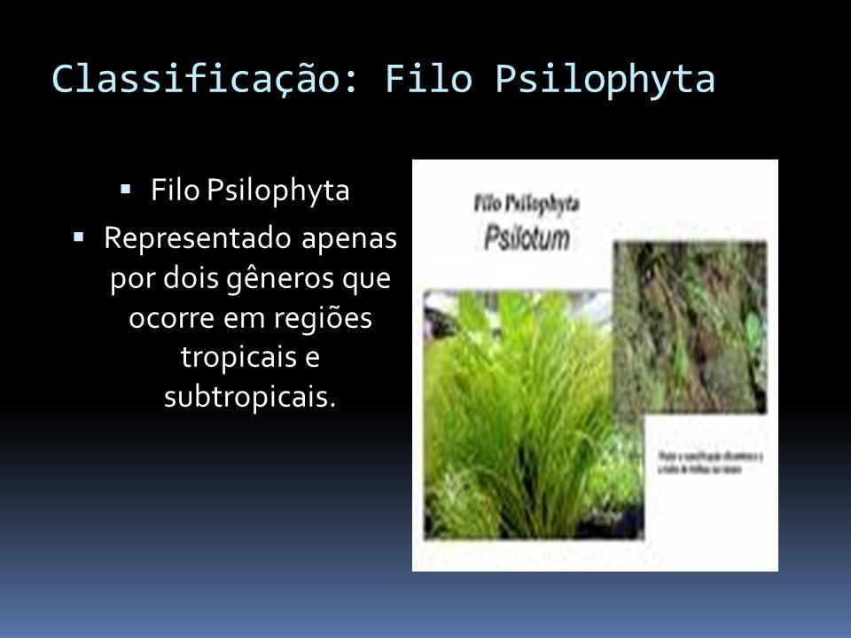 Classificação: Filo Psilophyta