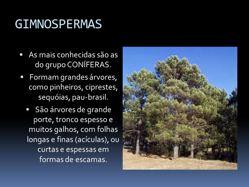 As mais conhecidas são as do grupo CONÍFERAS.