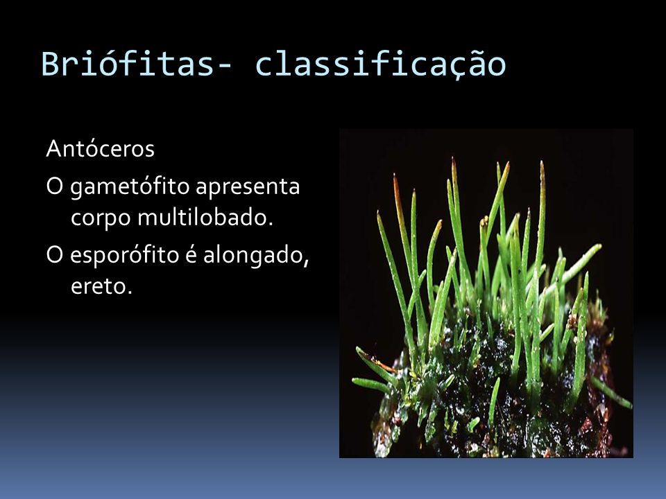Briófitas- classificação