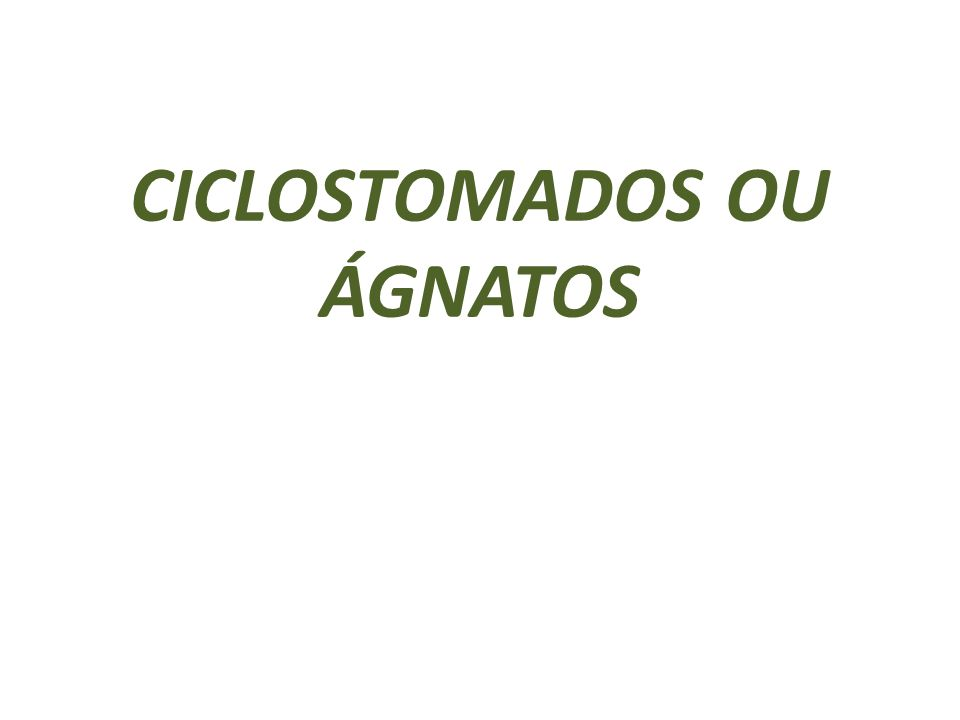 CICLOSTOMADOS OU ÁGNATOS