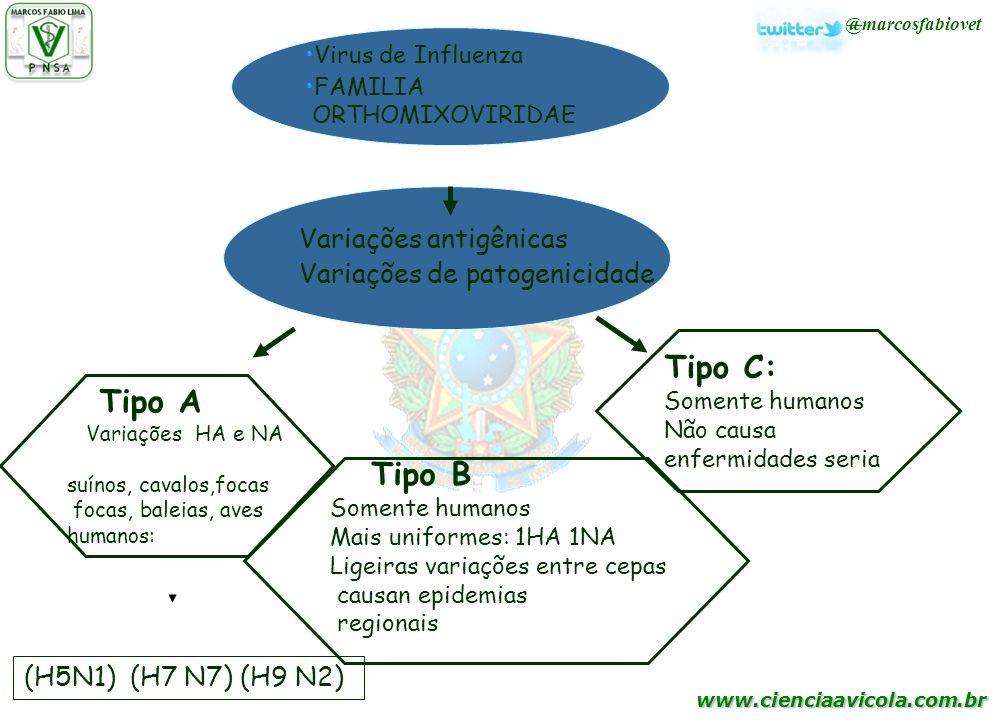 Tipo C: Tipo B Variações antigênicas Variações de patogenicidade
