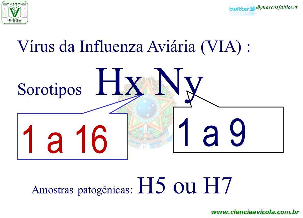 1 a 9 1 a 16 Vírus da Influenza Aviária (VIA) : Sorotipos Hx Ny