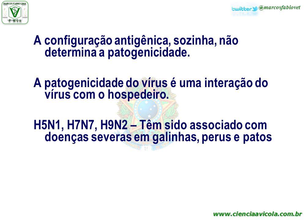 A configuração antigênica, sozinha, não determina a patogenicidade.