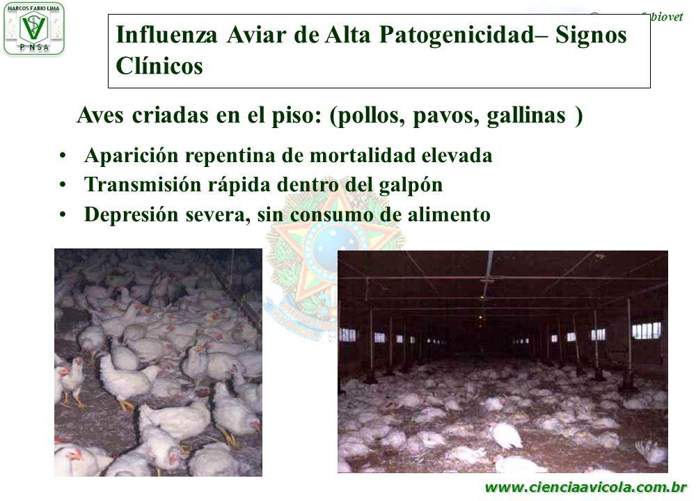 Influenza Aviar de Alta Patogenicidad– Signos Clínicos
