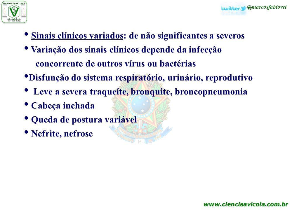 Sinais clínicos variados: de não significantes a severos