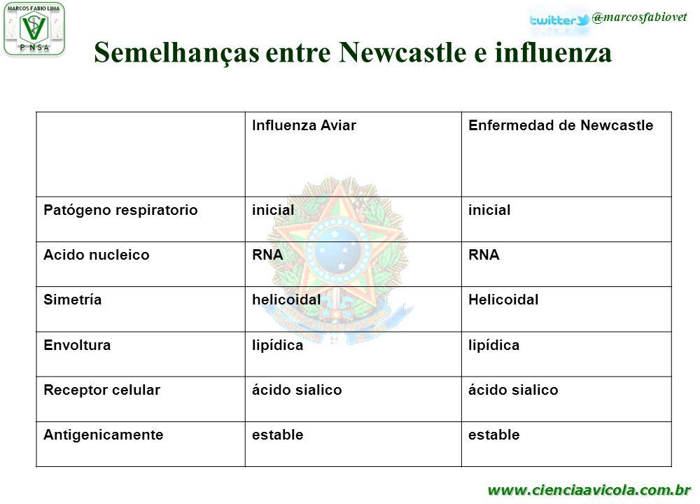 Semelhanças entre Newcastle e influenza