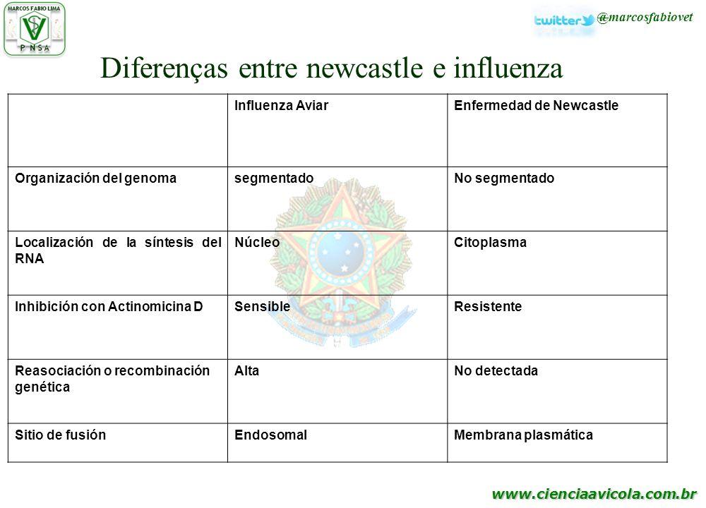 Diferenças entre newcastle e influenza