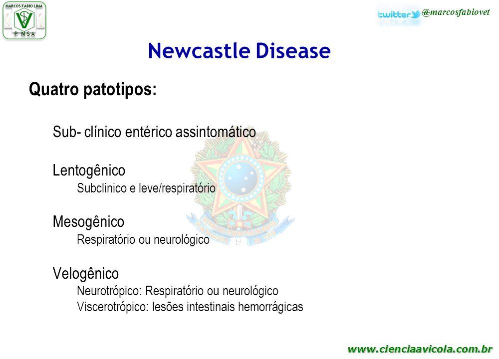 Newcastle Disease Quatro patotipos: