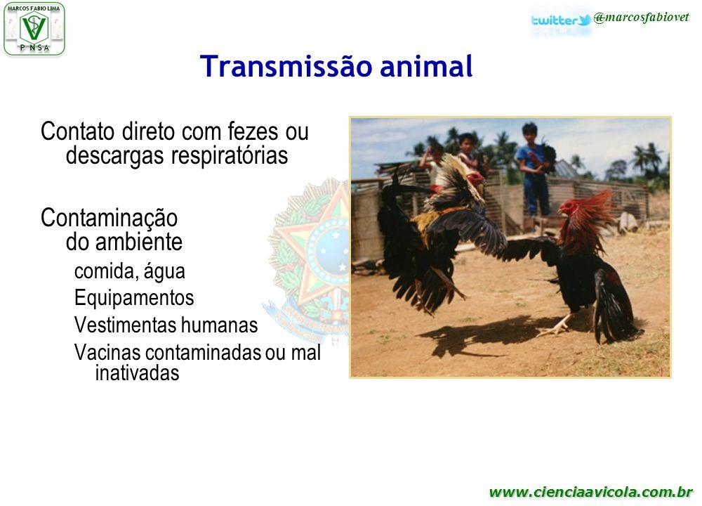 Transmissão animal Contato direto com fezes ou descargas respiratórias