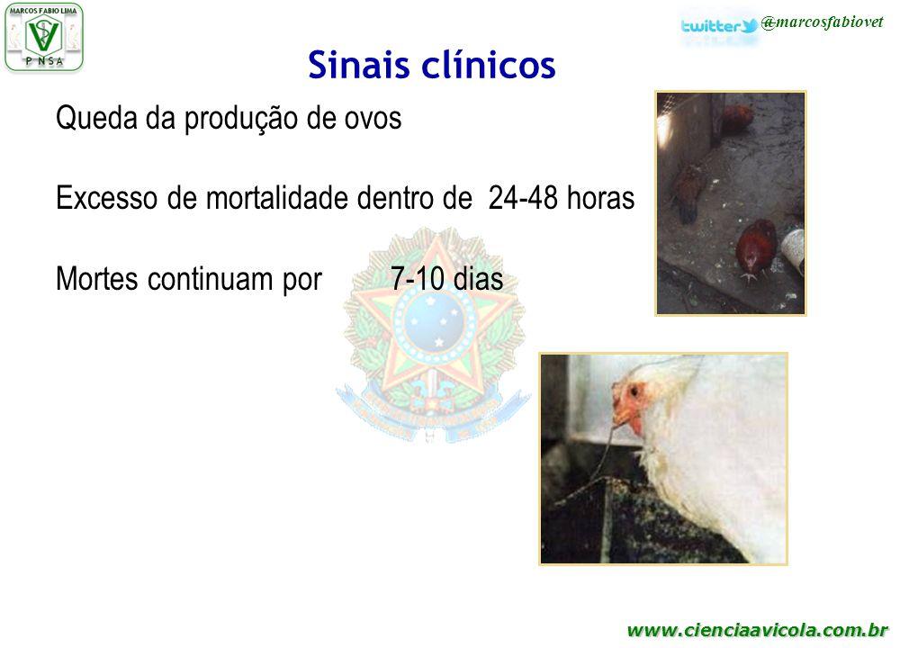 Sinais clínicos Queda da produção de ovos