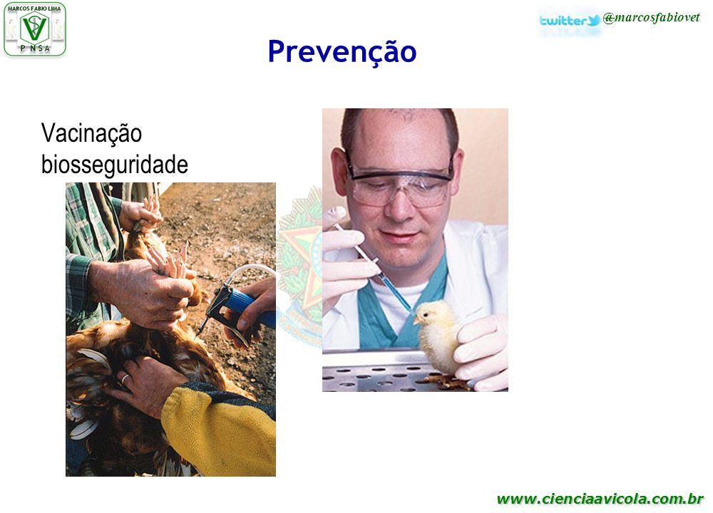 Prevenção Vacinação biosseguridade 37