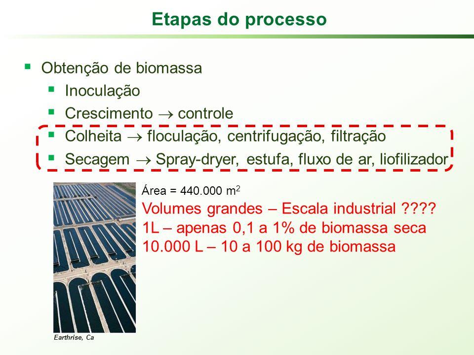 Etapas do processo Obtenção de biomassa Inoculação