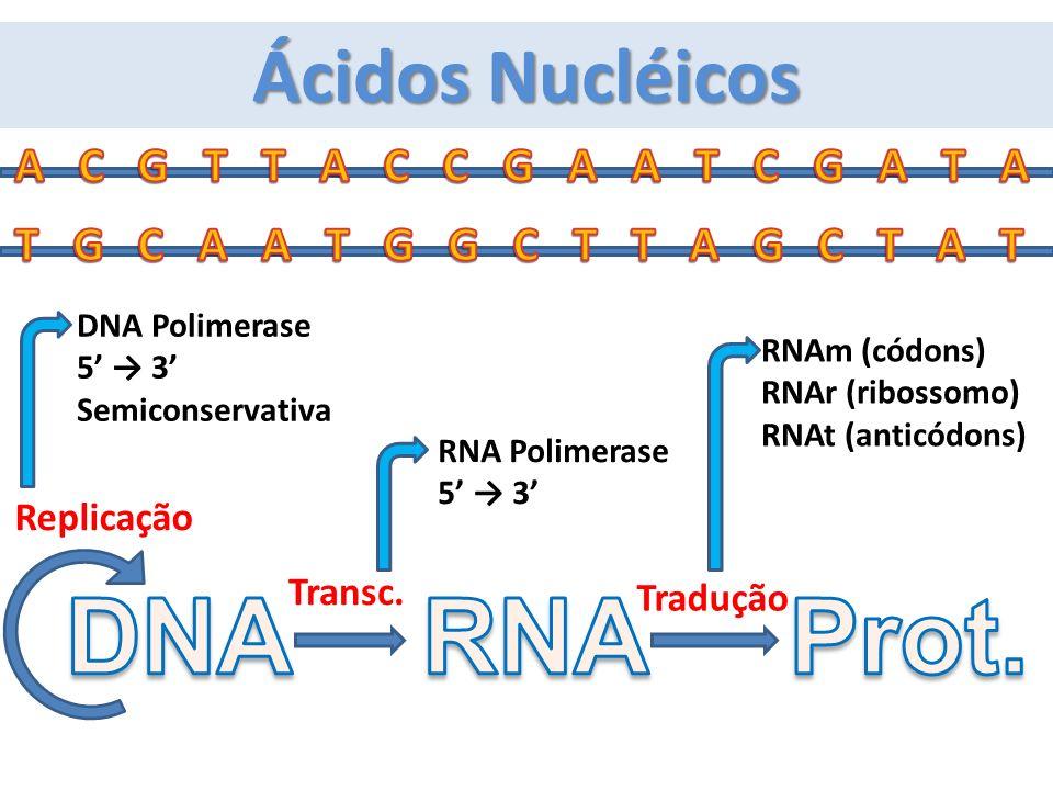 DNA RNA Prot. Ácidos Nucléicos A C G T T A C C G A A T C G A T A