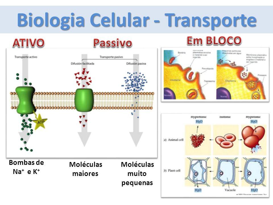 Biologia Celular - Transporte