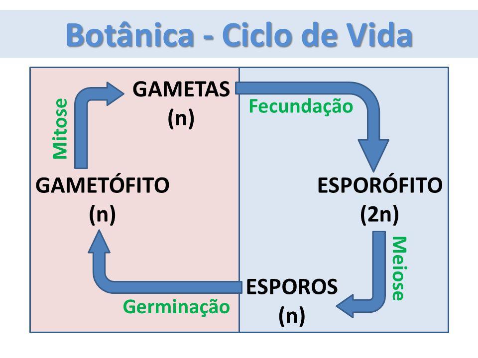 Botânica - Ciclo de Vida