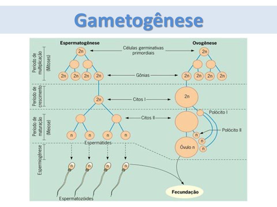 Gametogênese
