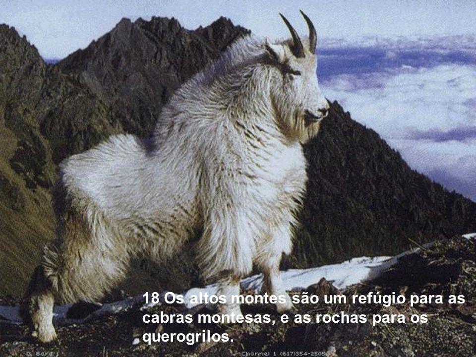 18 Os altos montes são um refúgio para as cabras montesas, e as rochas para os querogrilos.