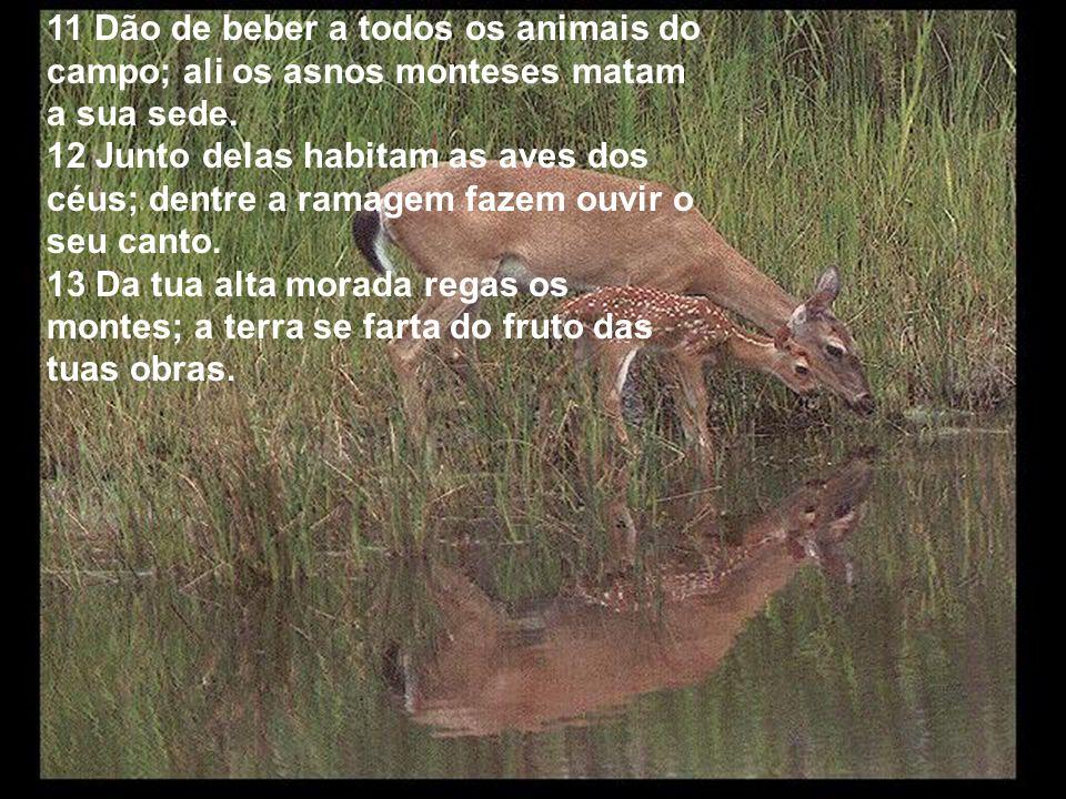 11 Dão de beber a todos os animais do campo; ali os asnos monteses matam a sua sede.