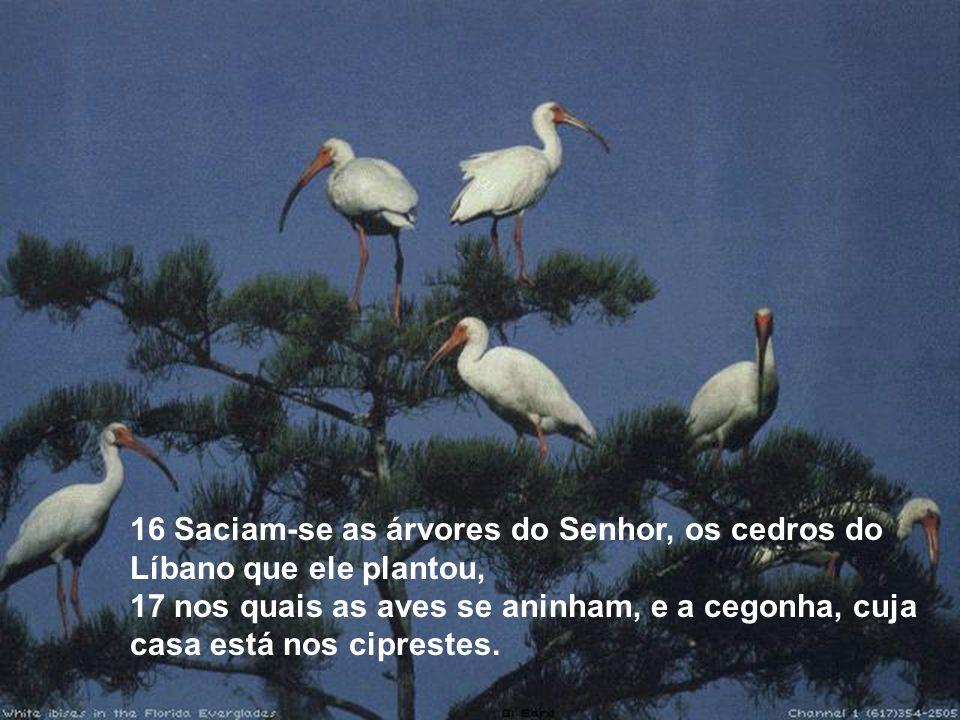 16 Saciam-se as árvores do Senhor, os cedros do Líbano que ele plantou,