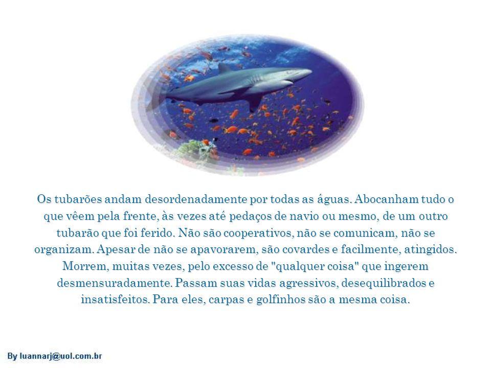 Os tubarões andam desordenadamente por todas as águas