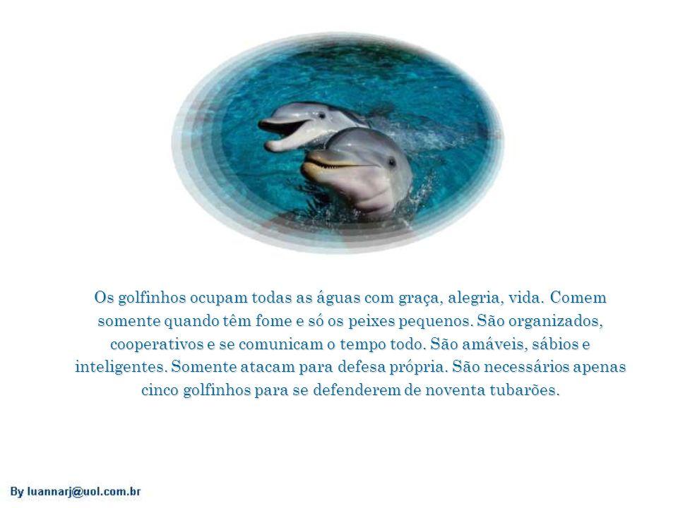 Os golfinhos ocupam todas as águas com graça, alegria, vida