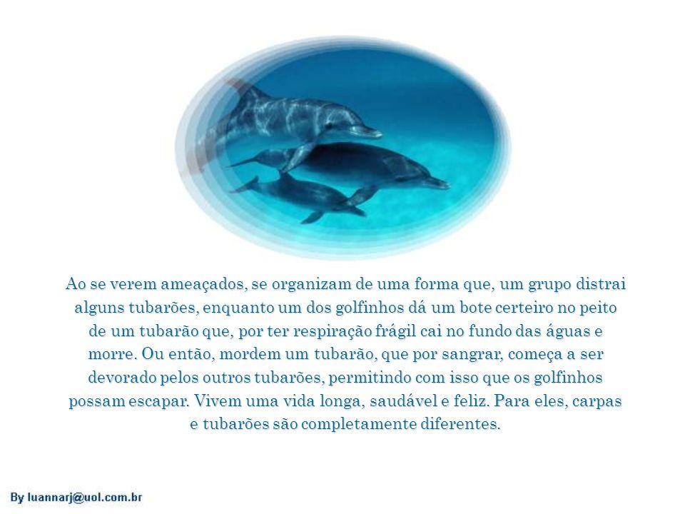 Ao se verem ameaçados, se organizam de uma forma que, um grupo distrai alguns tubarões, enquanto um dos golfinhos dá um bote certeiro no peito de um tubarão que, por ter respiração frágil cai no fundo das águas e morre.
