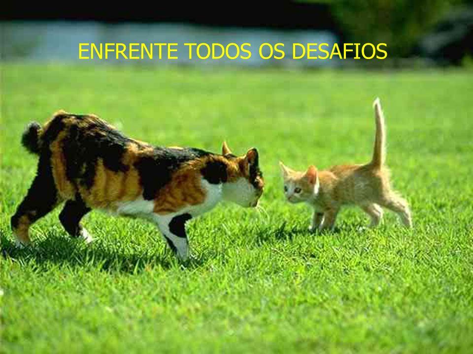ENFRENTE TODOS OS DESAFIOS