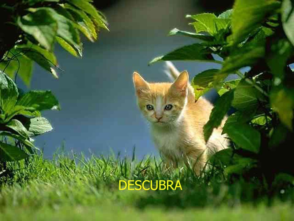 DESCUBRA