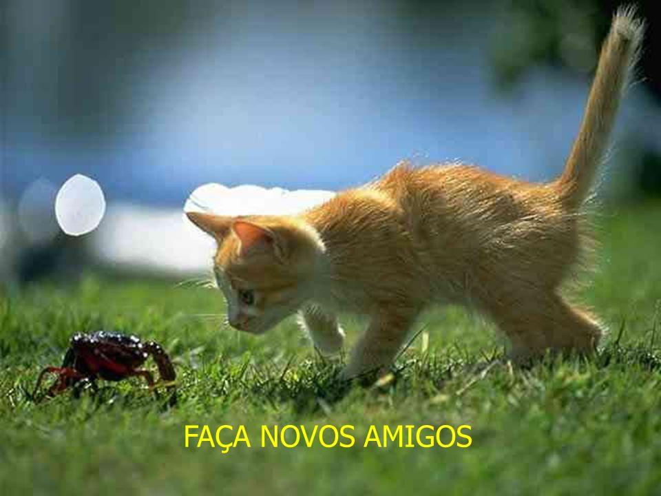 FAÇA NOVOS AMIGOS