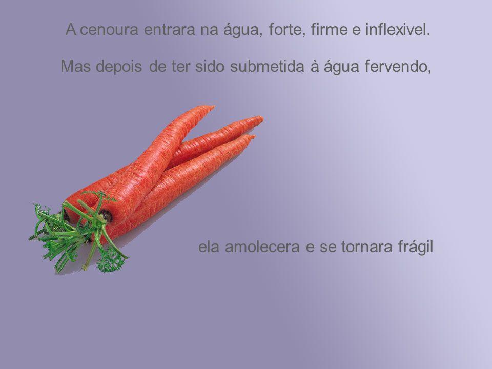 A cenoura entrara na água, forte, firme e inflexivel.