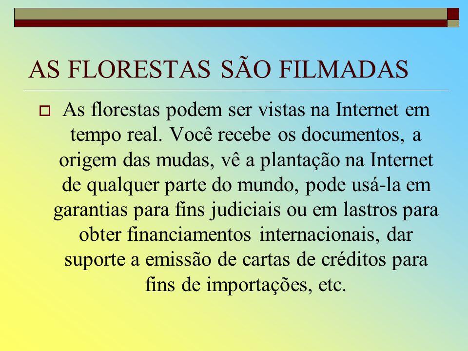 AS FLORESTAS SÃO FILMADAS
