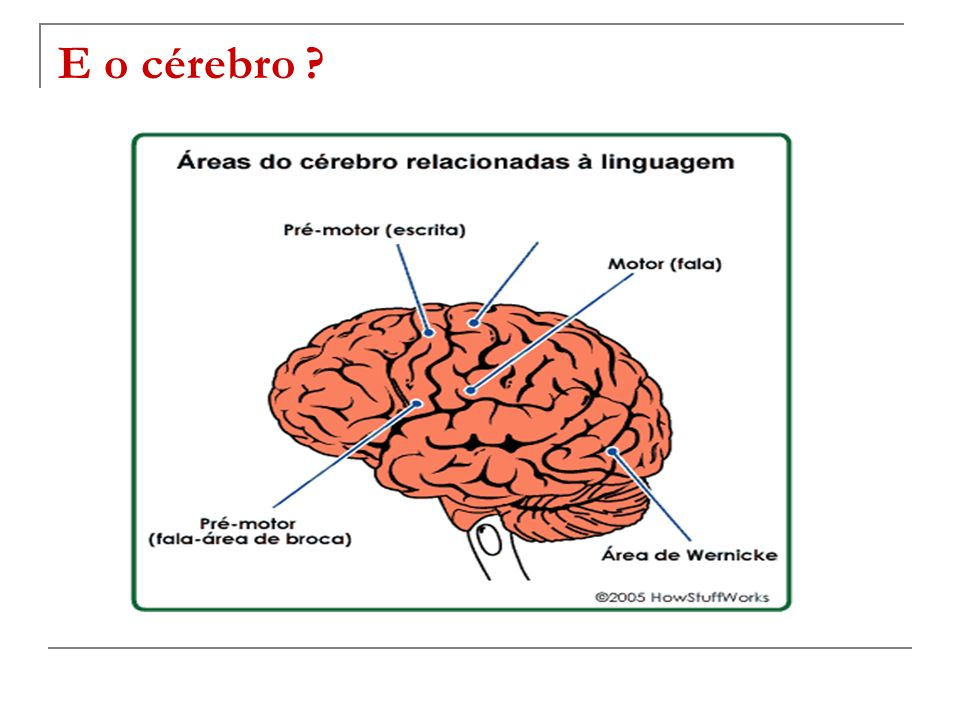 E o cérebro