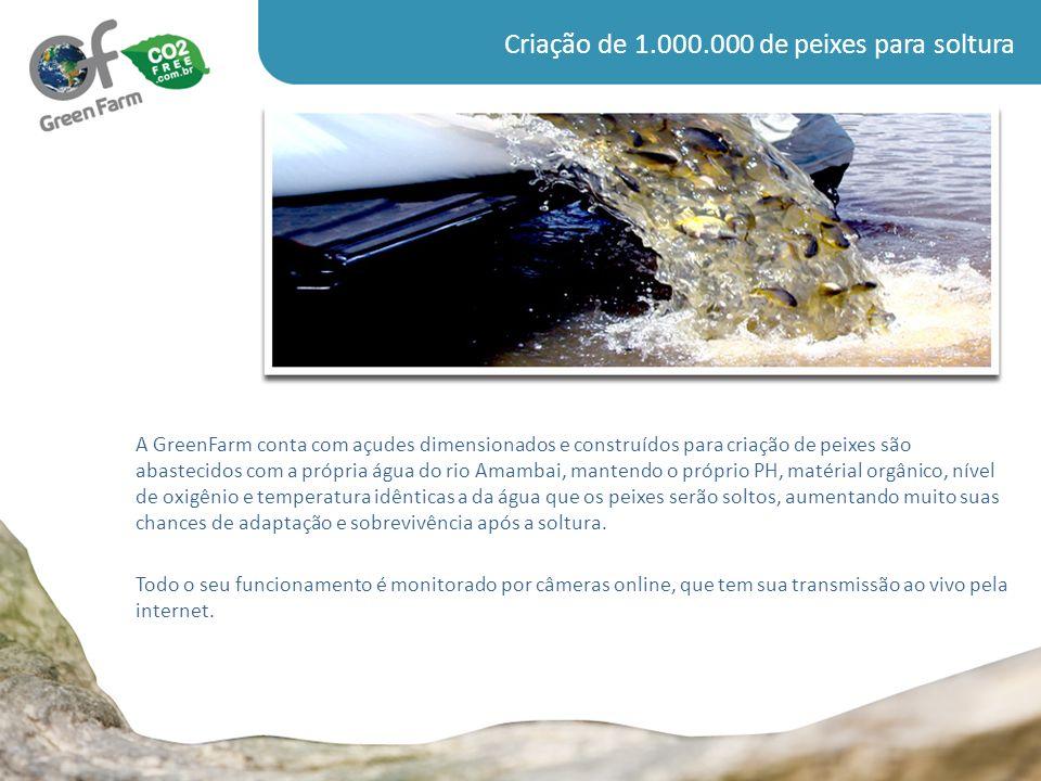 Criação de 1.000.000 de peixes para soltura