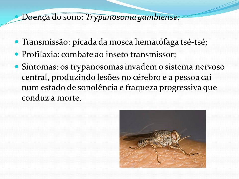 Doença do sono: Trypanosoma gambiense;