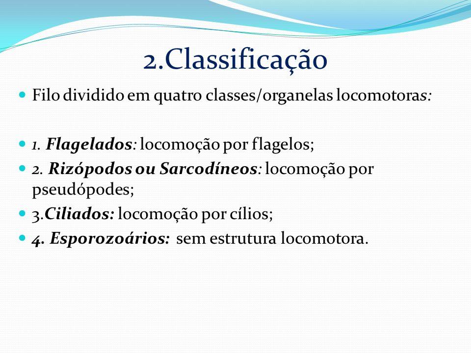 2.Classificação Filo dividido em quatro classes/organelas locomotoras: