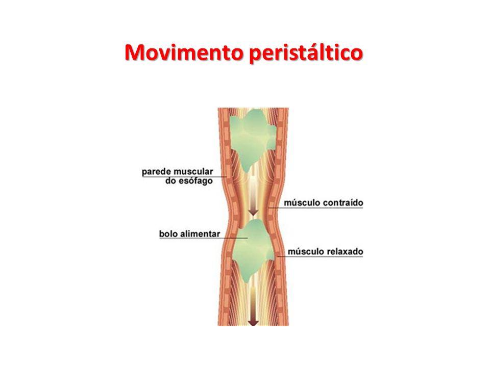 Movimento peristáltico