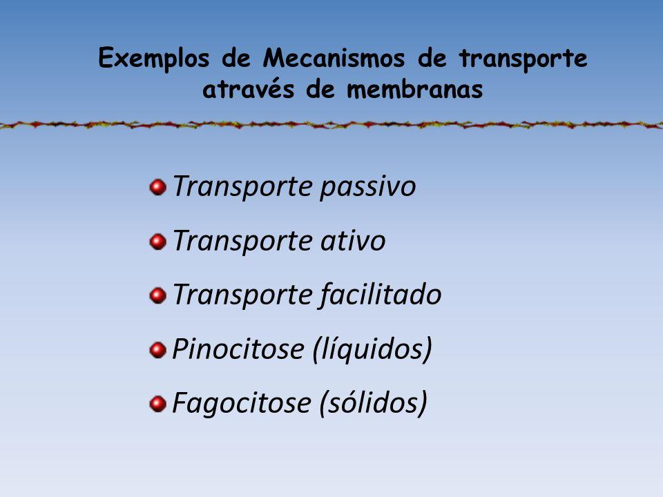 Exemplos de Mecanismos de transporte através de membranas