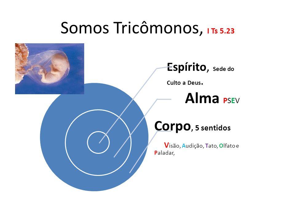 Somos Tricômonos, I Ts 5.23 Alma PSEV Corpo, 5 sentidos