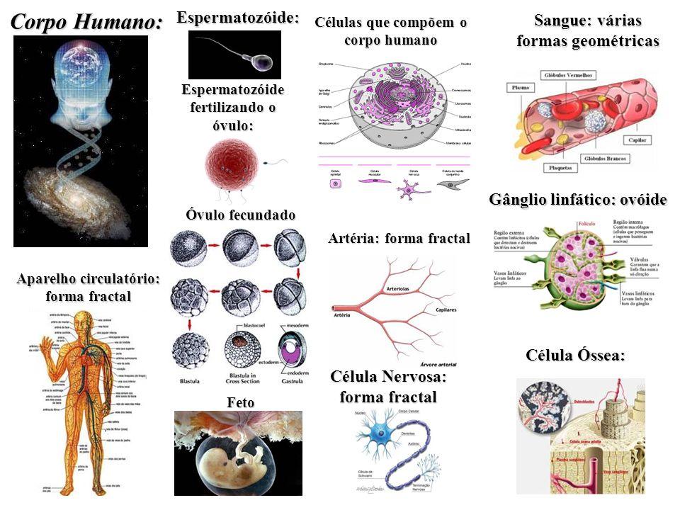 Corpo Humano: Espermatozóide: Sangue: várias formas geométricas
