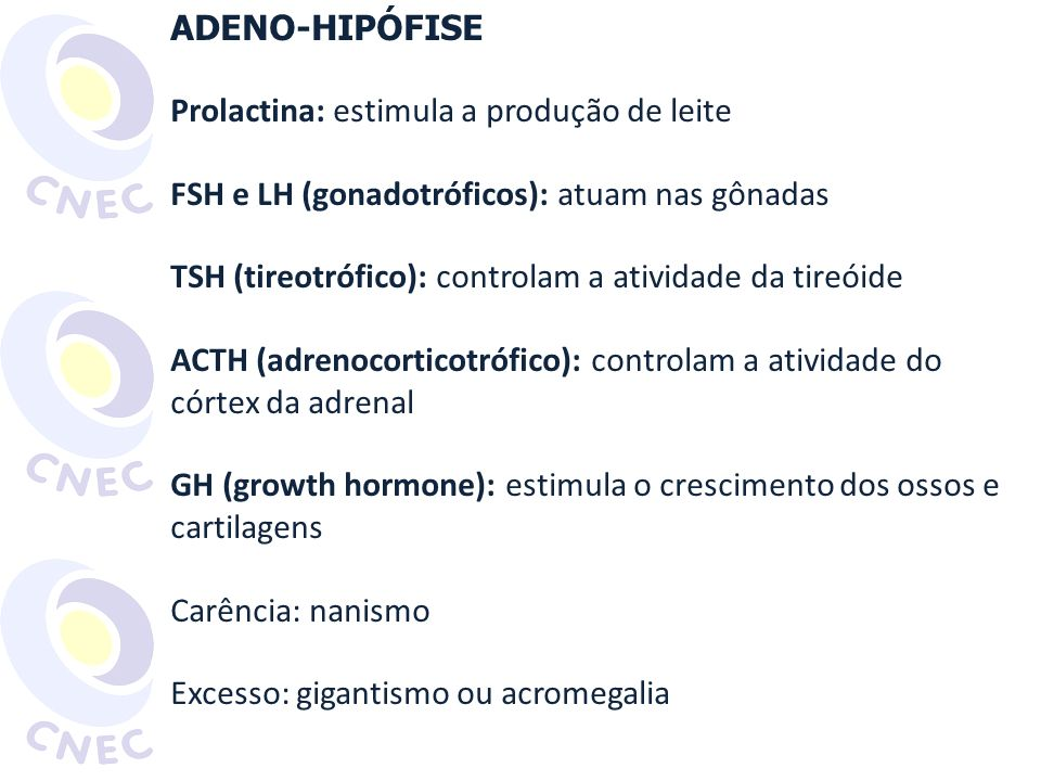 ADENO-HIPÓFISE Prolactina: estimula a produção de leite. FSH e LH (gonadotróficos): atuam nas gônadas.
