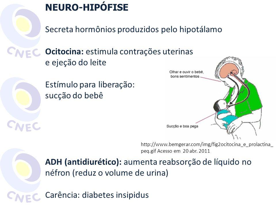Secreta hormônios produzidos pelo hipotálamo