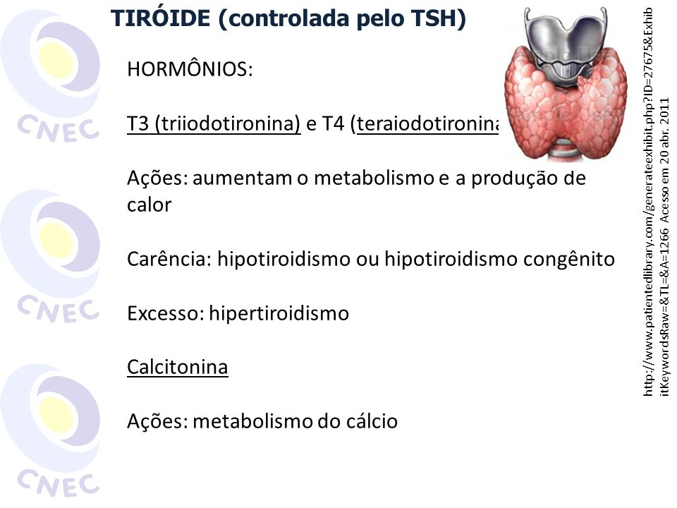 TIRÓIDE (controlada pelo TSH)