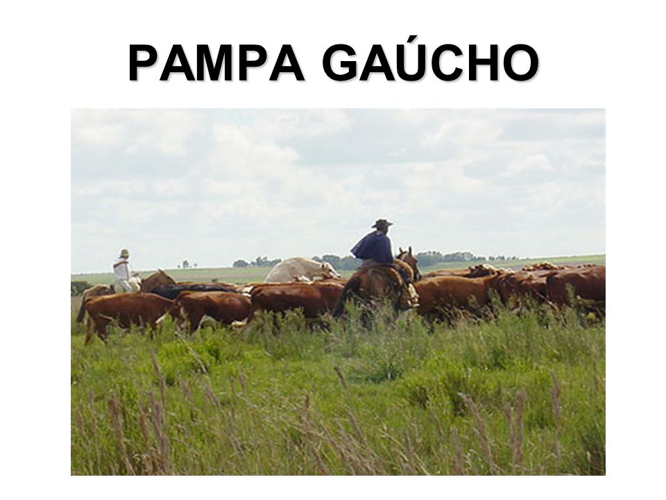 PAMPA GAÚCHO