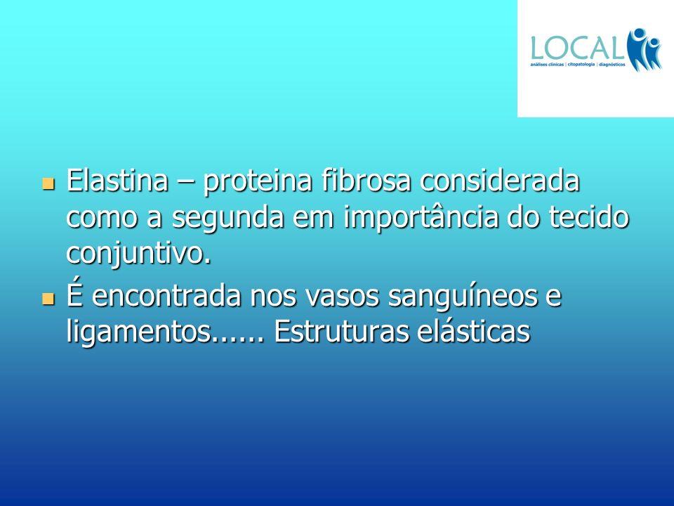 Elastina – proteina fibrosa considerada como a segunda em importância do tecido conjuntivo.