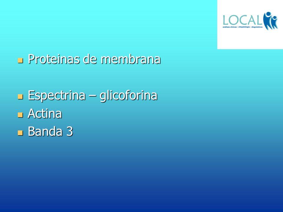 Proteinas de membrana Espectrina – glicoforina Actina Banda 3